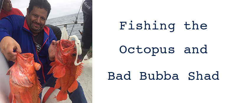 Fishing the Octopus and Bad Bubba Shad